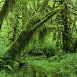 forêt vosgienne une Rencontre insolite-Atlaneastro