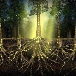 Les-arbres-communiquent-entre-eux-géants-la forêt-Atlaneatro
