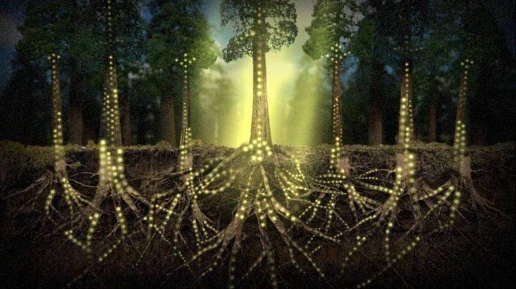 Les arbres communiquent entre eux les géants Part.2