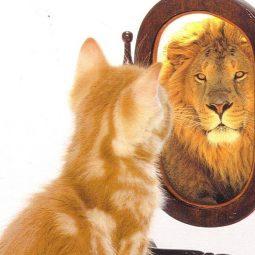 un chat qui devient lion dans un miroir estime de soi-Atlaneastro