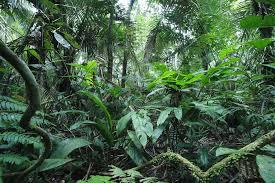 forêt d'Amazonie Part.2-Atlaneastro