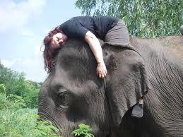 femme sur un éléphant relâchée compètementPart.1 pistage-Atlaneastro