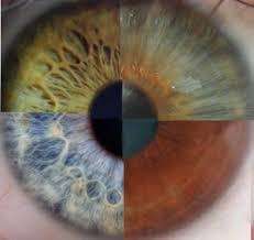 l'iridologie les 4 couleurs de l'iris Part.1-Atlaneastro