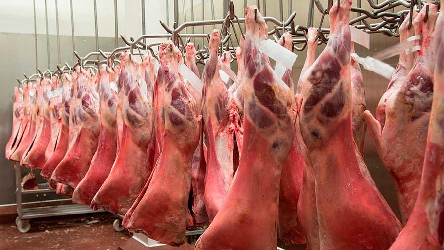 carcasse de viande dans un abattoir Part.3-Atlaneastro