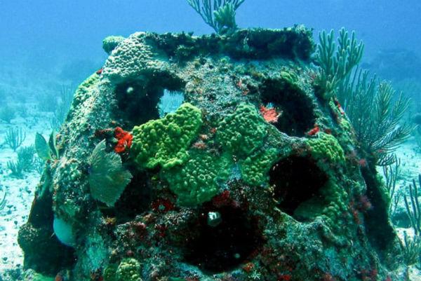 le récif de corail procédé funéraire écologiques Part.1-Atlaneastro