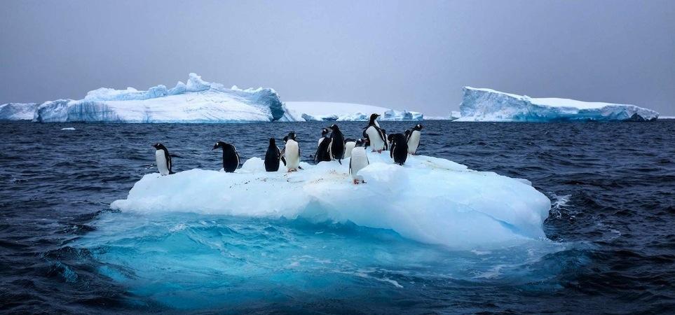 vivant pingouins sur une morceau étroit de banquise Part.5-Atlaneasto