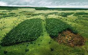 monde les poumons de la planète grignotés Part.5-Atlaneastro