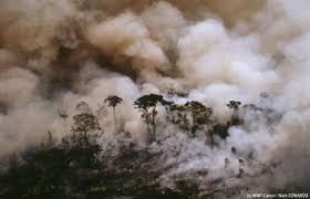 biologie feu de forêts engendrés par l'huike de palme Part.4-Atlaneastro