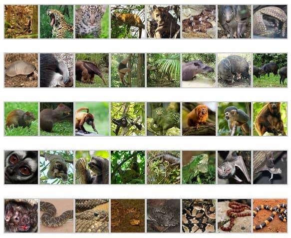 coeurs les animaux de la forêt amazonnienne part.2-Atlaneastro