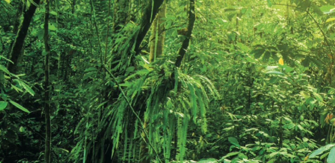 coeurs photo de a forêt amazonnienne Part.2-Atlaneastro