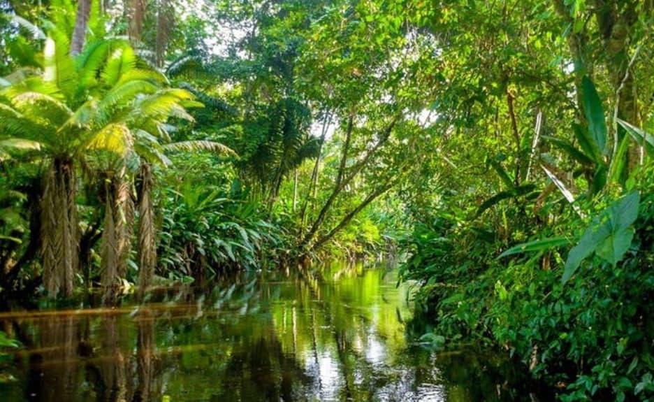 pardo, image de la forêt amazonnienne Part.3-Atlaneastro